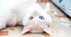 Suitable Cat DNA Can Tell You a Lot